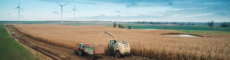 zakiszanie kukurydzy