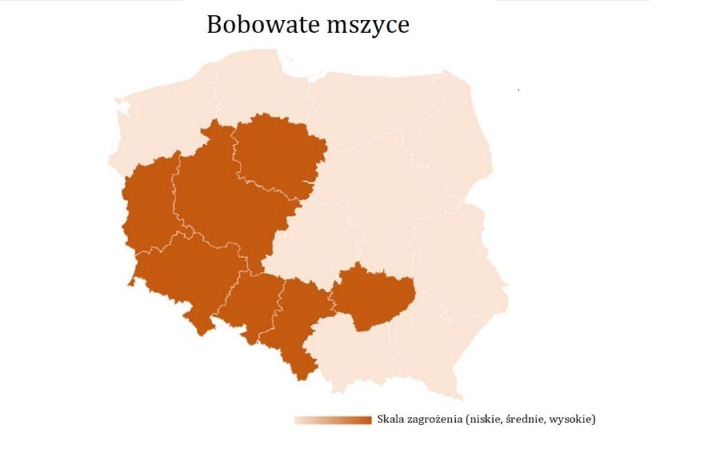 mapa-wystepowania-owadow-bobowate-mszyce
