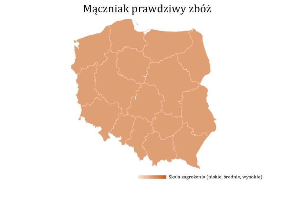 Maczniak-prawdziwy-zboz-mapa-wystepowania-owadow