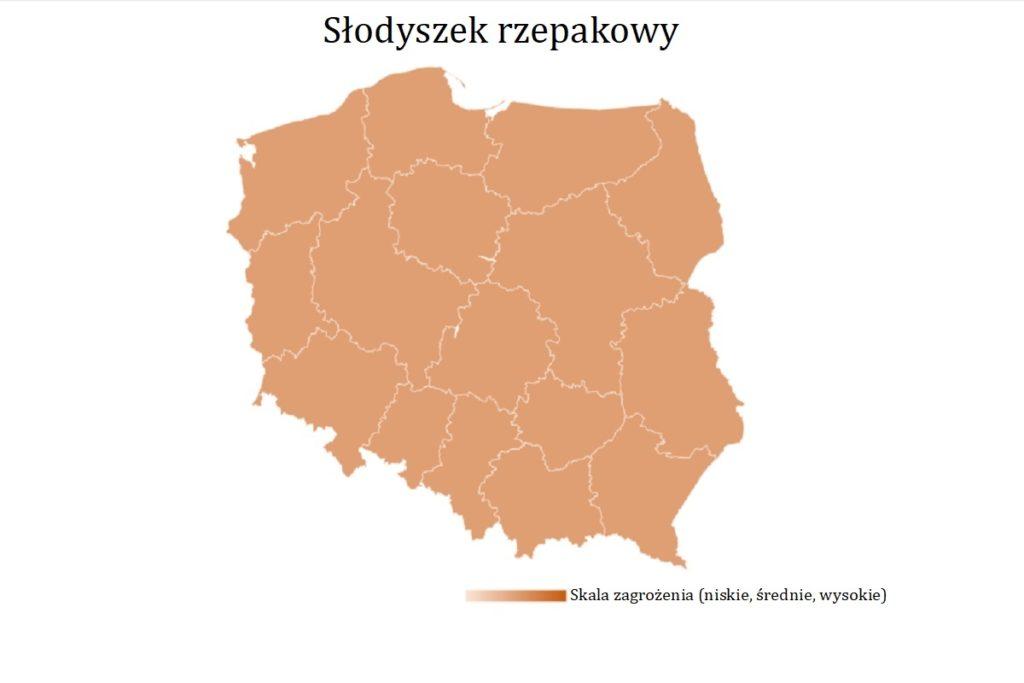slodyszek-rzepakowy-mapa-wystepowania-owadow
