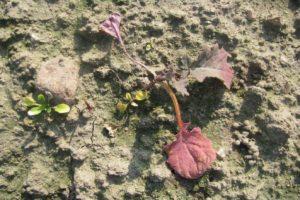 zerowanie-szkodnikow-na-roslinach-uprawnych