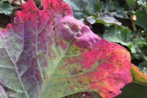 choroby-roslin-rolniczych