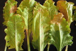szkodniki-i-choroby-roslin-rolniczych