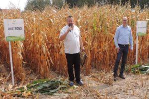 pole-dni-kukurydzy-barcice-procam