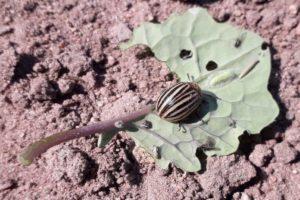 zerujace-owady-na-roslinach