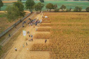 dni-kukurydzy-glebokie-procam