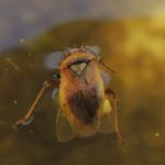 szkodnik-owadzi