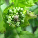 szkodnik-owadzi-na-roslinie
