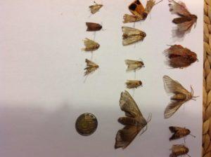 owady-zlapane-w-pulapke