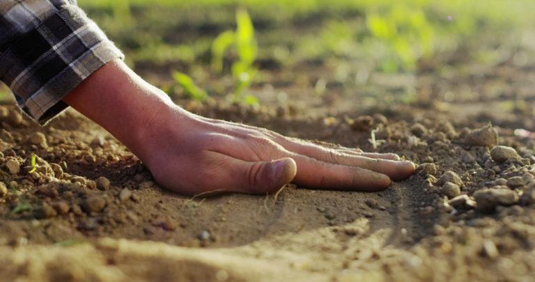 mikroorganizmy-glebowe