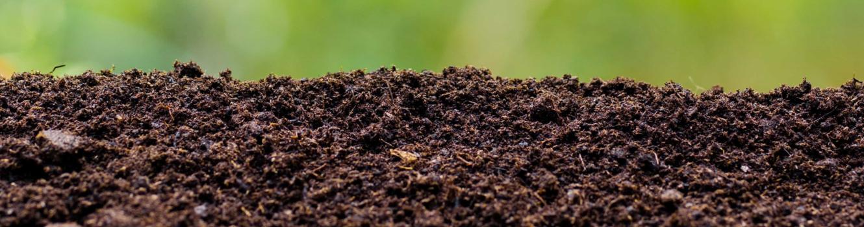 zdrowa-gleba