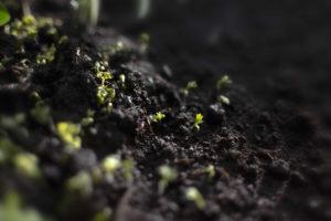 zdrowa gleba