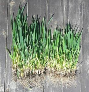 zaprawianie nasion