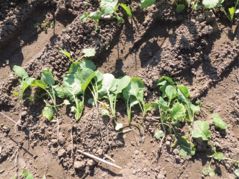 ograniczanie stosowania środków ochrony roślin